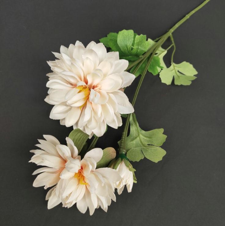 hoa cuc balan mo phong