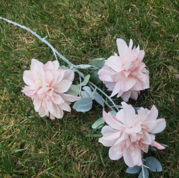 hoa mau don mo phong